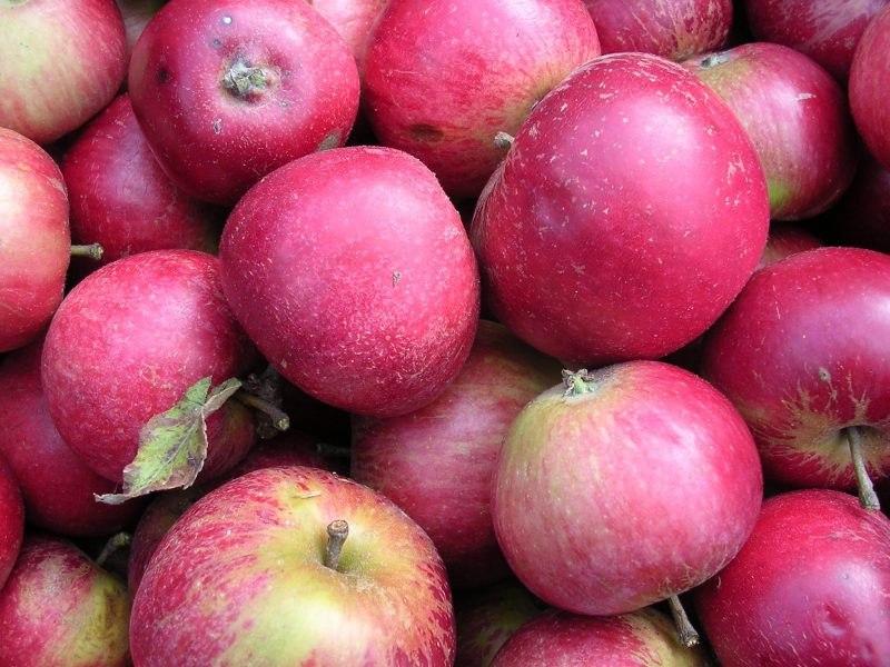 Worcester Pearmain Apples