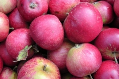 Worcester Pearmain Apples